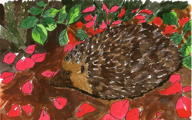 The hedgehog has taken to life in the towns, finding shelter and food in the diverse habitats of our suburbia.