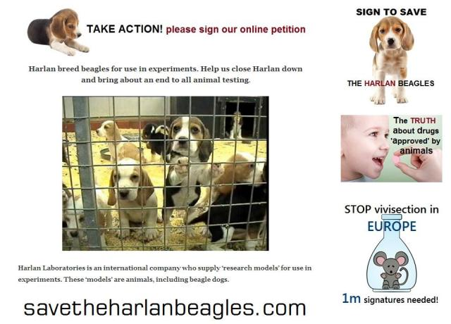 save the harlan beagles