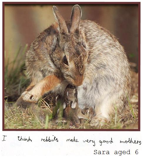wild rabbit and baby
