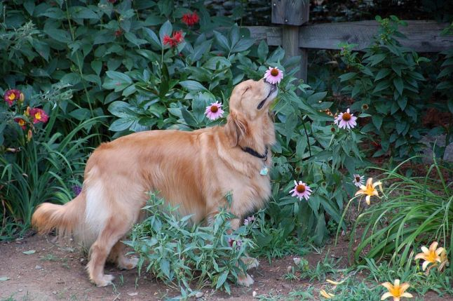 Molly pauses for a moment to smell a flower in the butterfly garden.  By jaho326