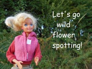 wild flower spotting