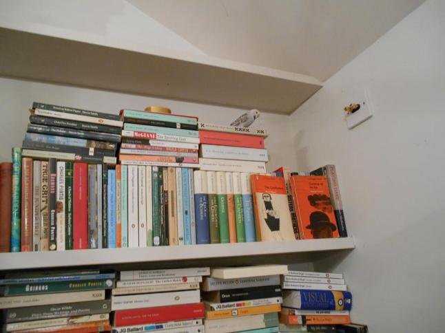 Carly on the bookshelf