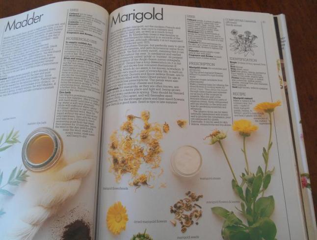 marigold uses