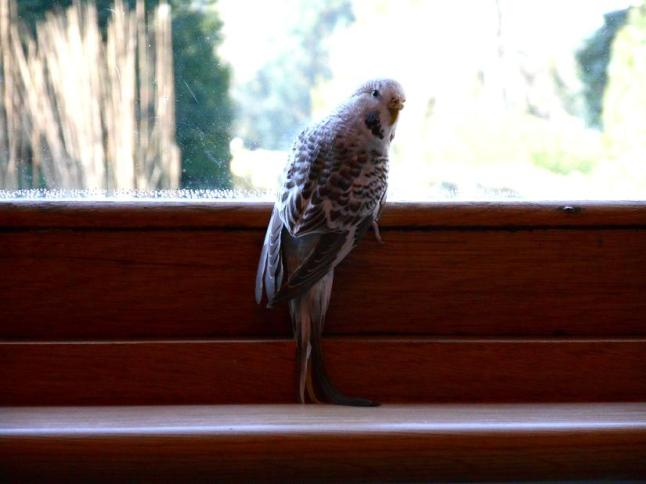 perch by the window