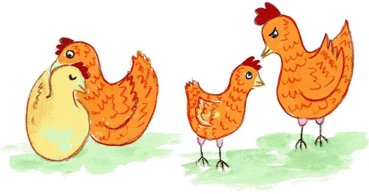 chickens are people
