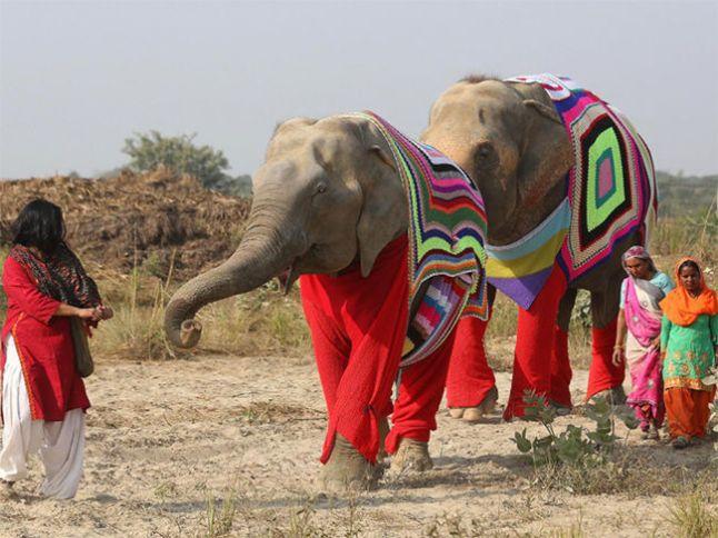trajes-elefantes-frio_plyima20170120_0021_5