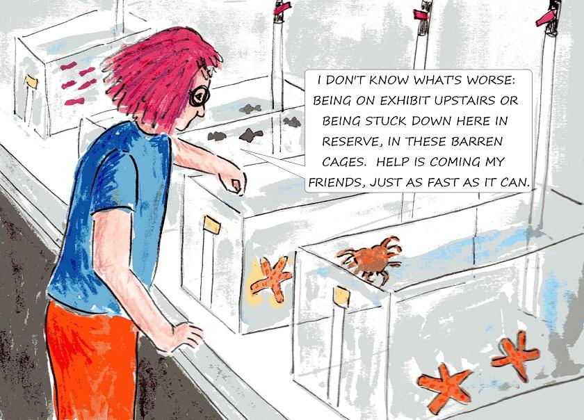 vegan children's story